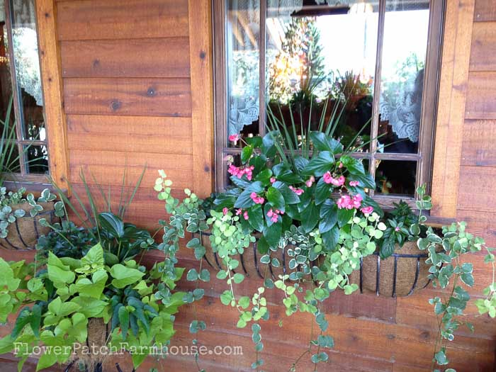 Flower Patch Farmhouse & Shade loving plants in Containers - Flower Patch Farmhouse