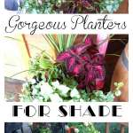 Shade Loving Plants In Containers Flower Patch Farmhouse