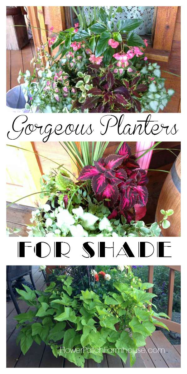 Gorgeous planters for Shade, FlowerPatchFarmhouse.com
