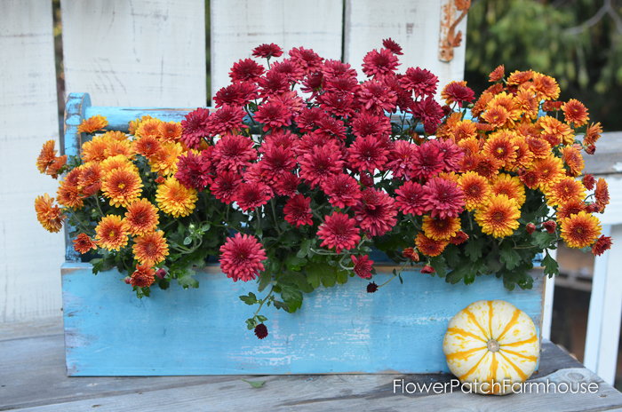 DIY rustic Toolbox planter with Mums. An easy DIY project for the beginner and a great staging tool FlowerPatchFarmhouse.com