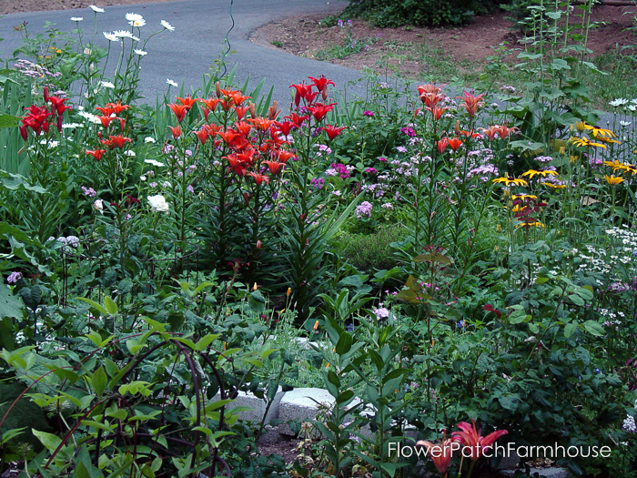 How to Grow Sweet Williams, FlowerPatchFarmhouse.com (3 of 8)