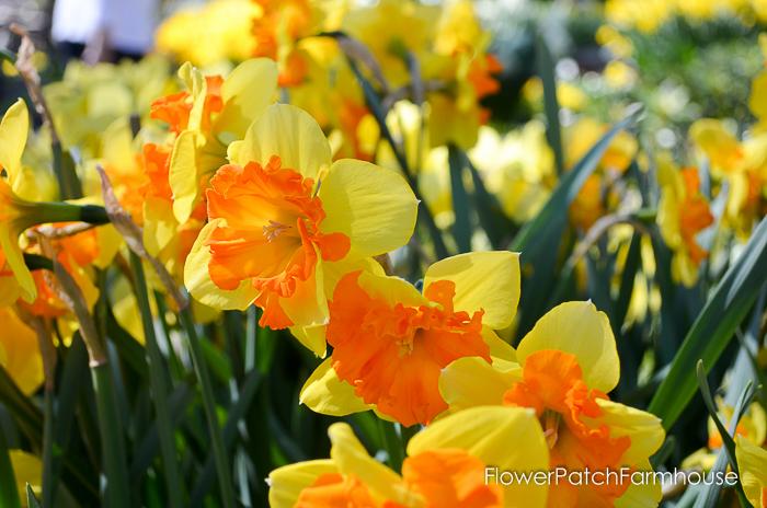 Ironstone March 2016, FlowerPatchFarmhouse.com (2 of 77)