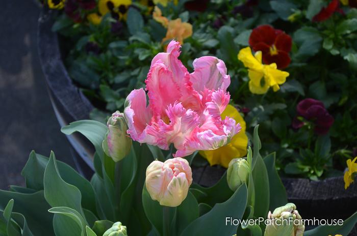 Ironstone March 2016, FlowerPatchFarmhouse.com (31 of 77)