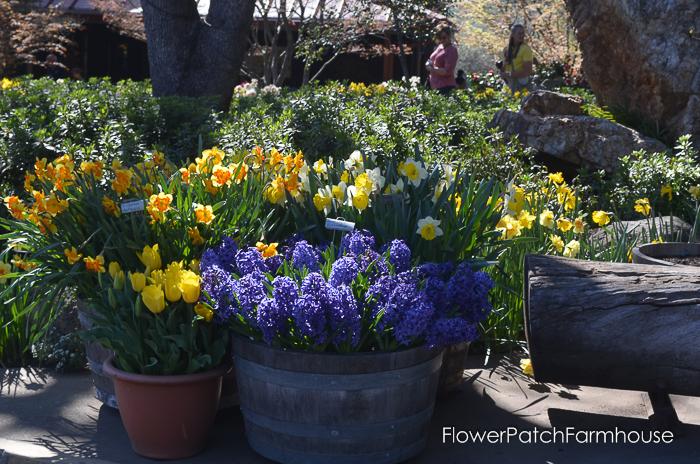 Ironstone March 2016, FlowerPatchFarmhouse.com (47 of 77)