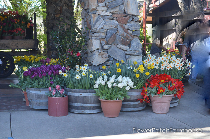 Ironstone March 2016, FlowerPatchFarmhouse.com (49 of 77)