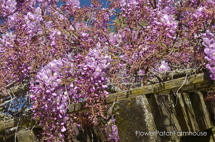 Ironstone March 2016, FlowerPatchFarmhouse.com (76 of 77)