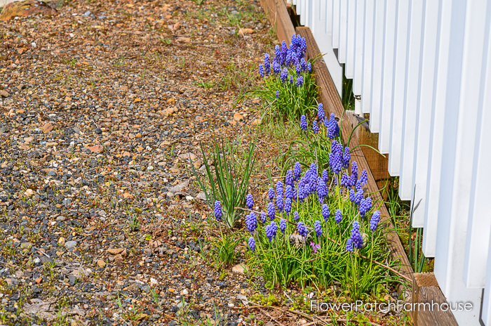 Spring in White Pines April 2016, FlowerPatchFarmhouse.com (14 of 60)