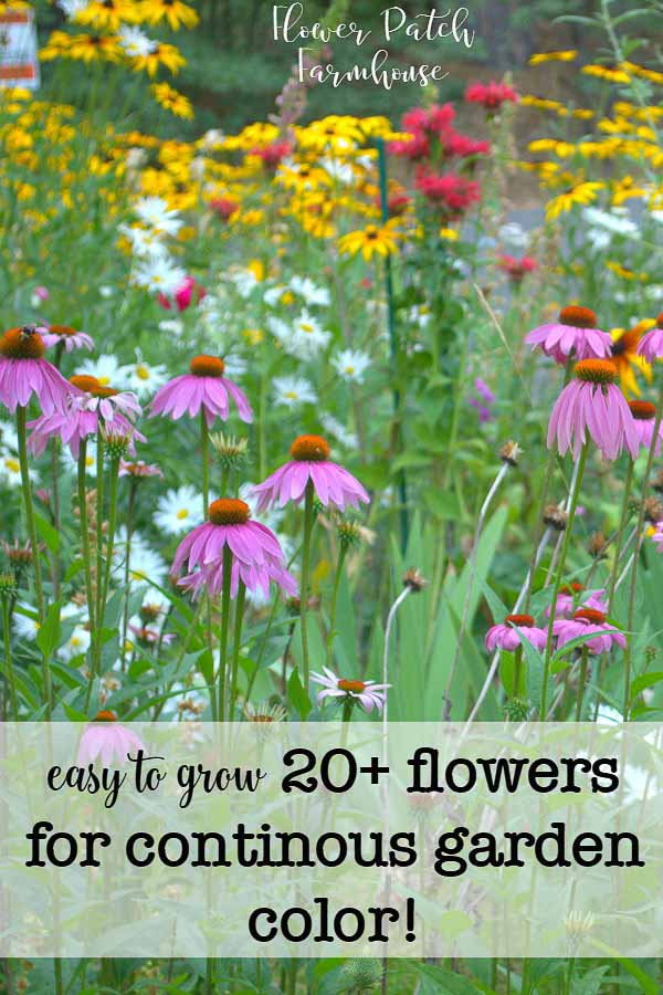 You can get all summer color with easy to grow flowers. Many are perennials that come back every year and will thrive in many conditions and soils. Try growing these beauties to have a gorgeous flower filled cottage garden today!  #cottagegarden #smallgarden #flowers #perennials