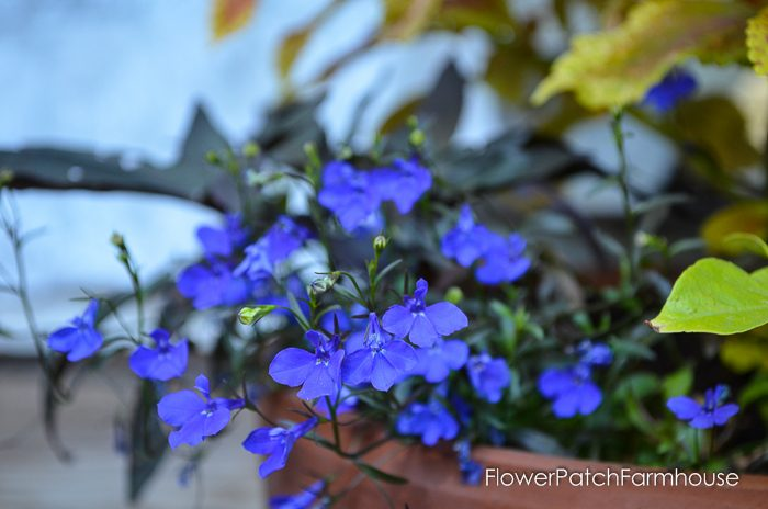 my-garden-in-september-17-of-36