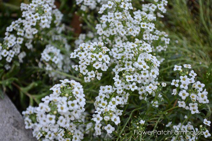 my-garden-in-september-23-of-36