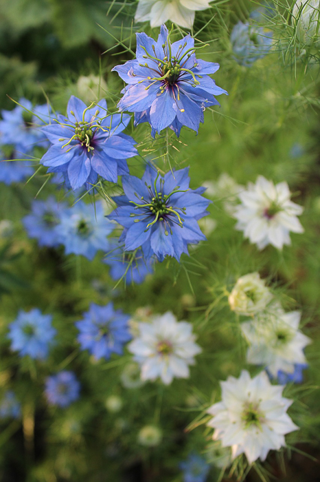 seeds-for-fall-planting-4-of-6
