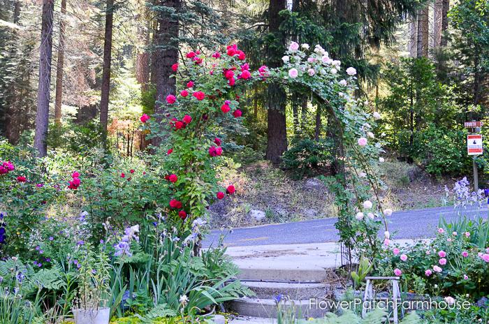 Prune Train Your Climbing Rose Flower Patch Farmhouse