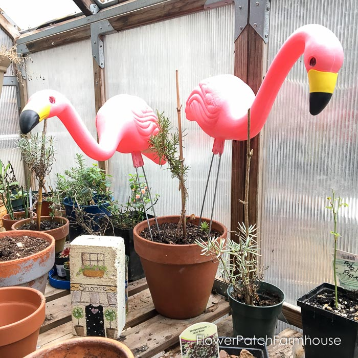 Why I love terra cotta pots and so will your plants
