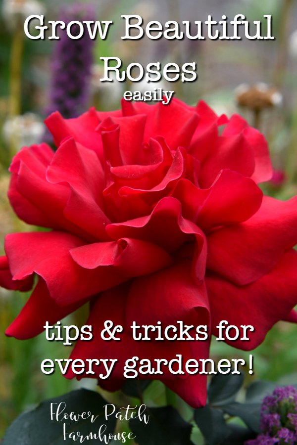 Red rose with text overlay, FlowerPatchFarmhouse.com