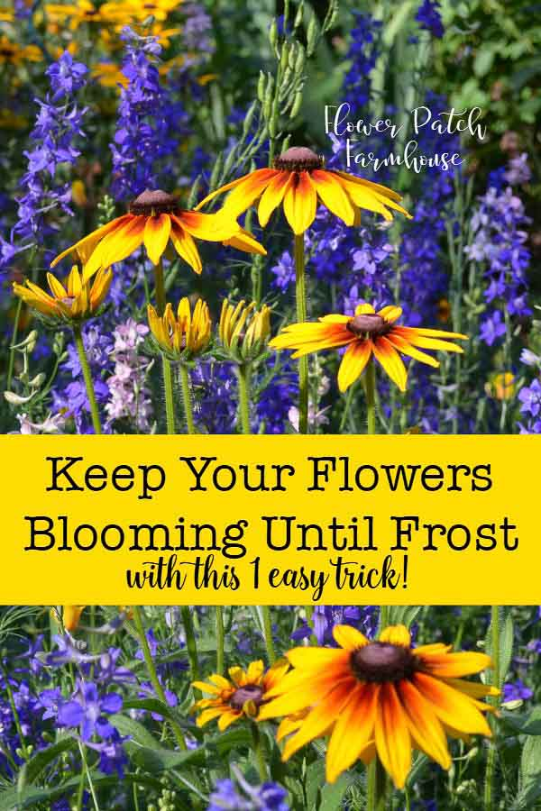 Want to know the secret to beautiful long lasting blooms in your garden all Summer long.  Even up until first frost? I show you step by step how easy it is with basic tools. #garden #cottagegarden #flowers #gardening @smallgardenideas