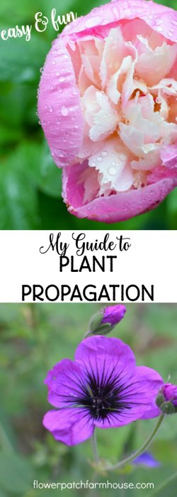 My guide to plant propagation, a collection of posts dedicated to propagating my favorite plants. Easy and fun