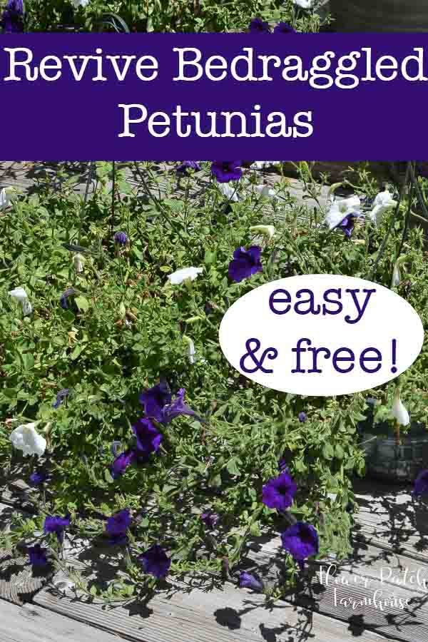Reviving Potted Petunias - Flower Patch Farmhouse