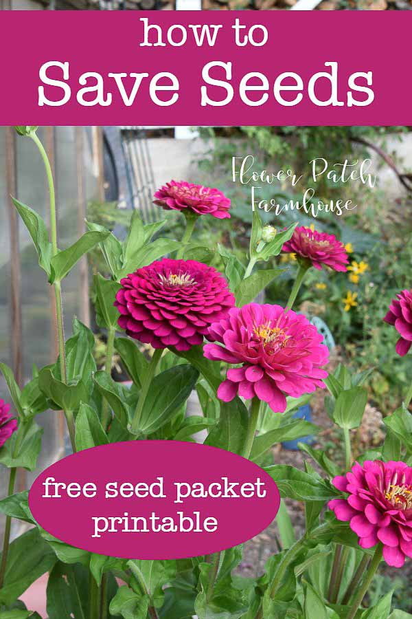 Seed Saving for More Garden Blooms, a great way to expand your garden for free. Keep for yourself, join a seed swap or give as gifts. Free downloadable seed packet pattern available!
