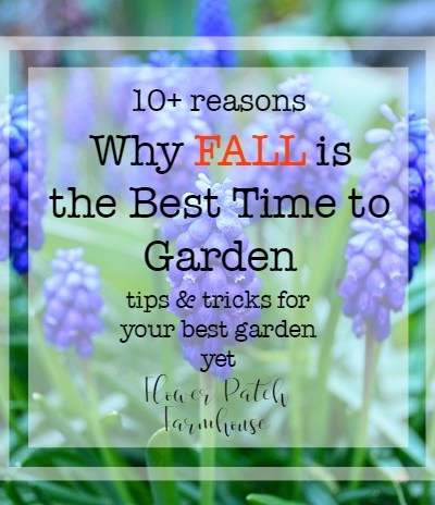 Why Fall is the Best Time to Garden