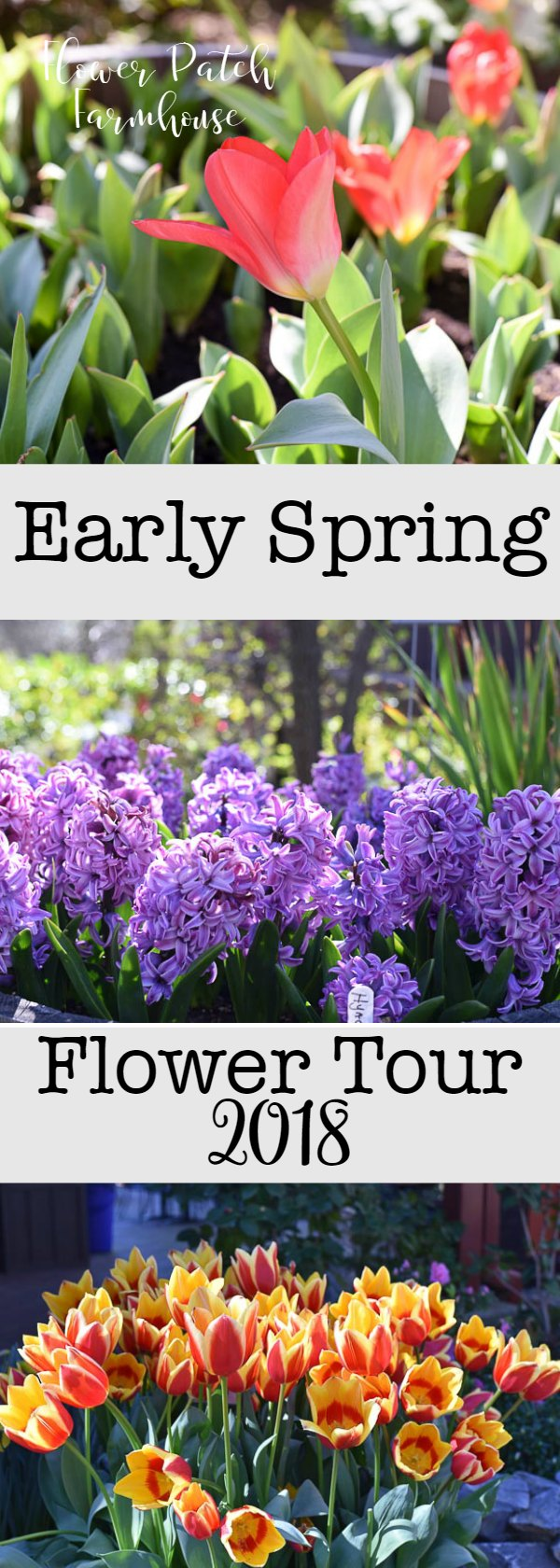 Enjoy some early Spring flowers while you wait out winter, lots of tulips, daffodils and sweet smelling hyacinths.  See how you can plant up barrels and containers with an abundance of blooms.