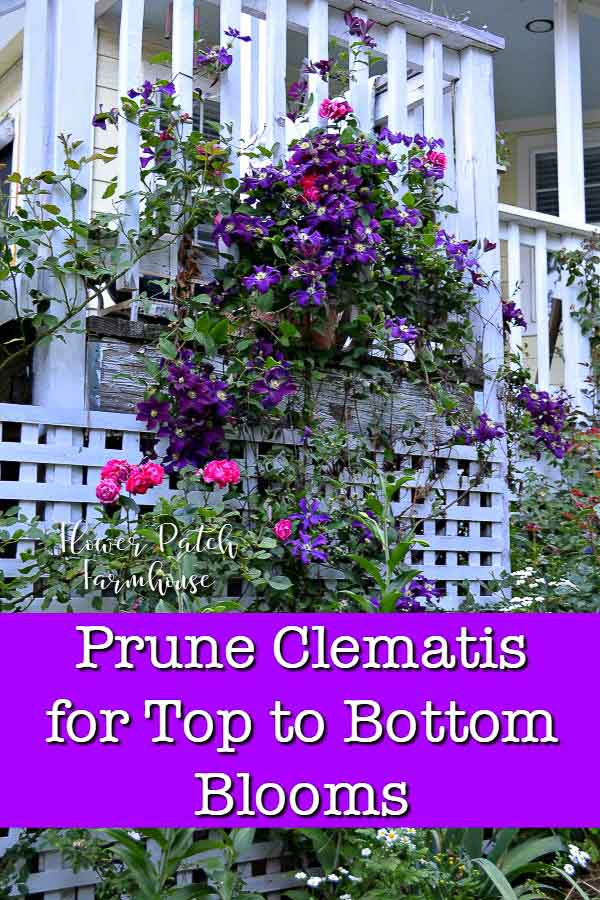Warsaw Nike clematis climbing back porch rail with red rose, text overlay reads Prune Clematis for top to bottom blooms, Flower Patch Farmhouse