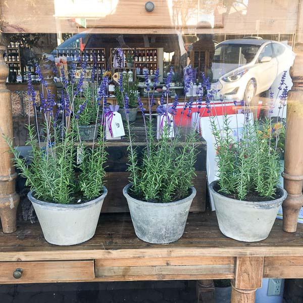 visit to Fredericksburg Texas, lavender in window