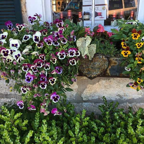 visit to Fredericksburg Texas, window boxes filled