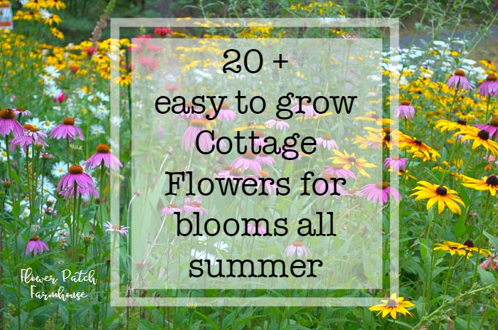 Plant your cottage garden for continuous color flower patch farmhouse mightylinksfo