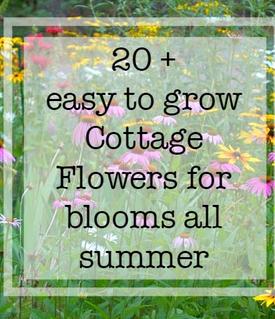 Plant Your Cottage Garden for Continuous Color