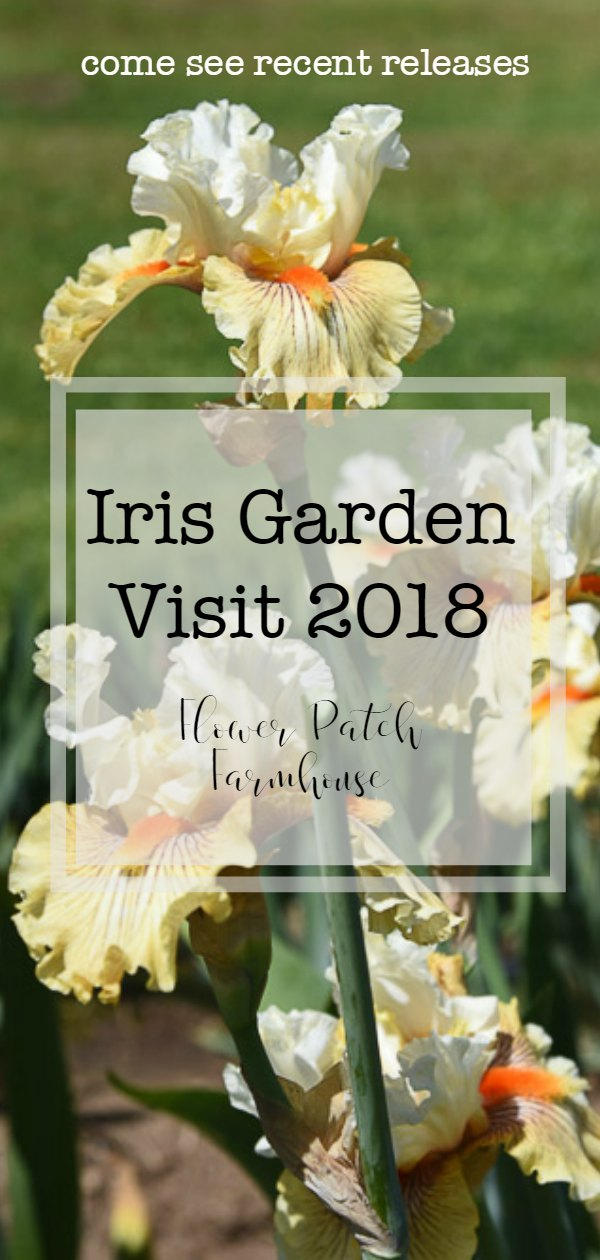 Come see a few photos from my recent visit to a local Iris Garden where the breed new colors and release them to the public. Fascinating color combinations and attributes that gardeners will love. #iris #garden #cottagegardens #easytogrow