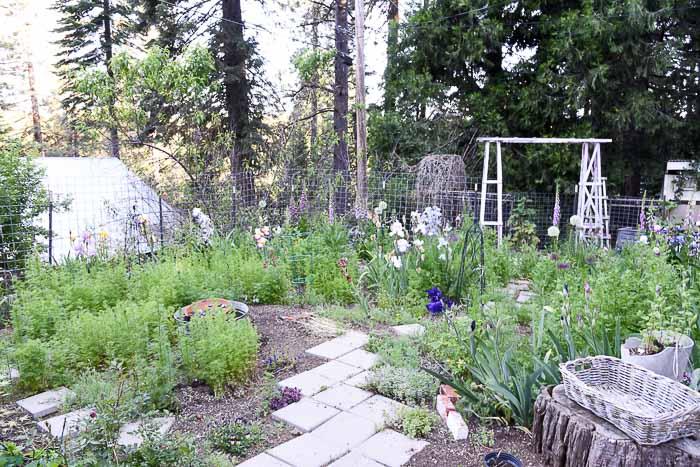Garden Journal June 4th