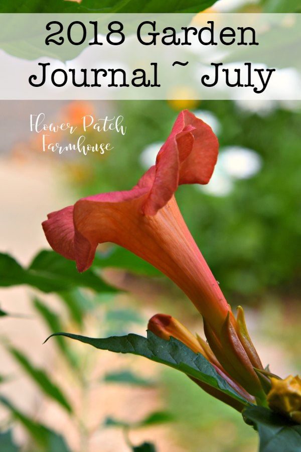 2018 Garden Journal, Flower Patch Farmhouse.  What is happening in the cottage garden. Lots of bright summer flowers are blooming and flying visitors too!