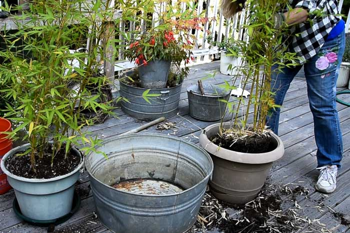 pot up bamboo divisions