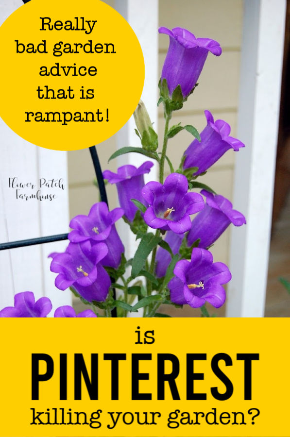 canterbury bells with text overlay, Is Pinterest killing your garden, flower patch farmhouse