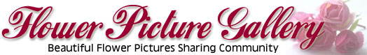 Flowers Pictures Gallery Logo