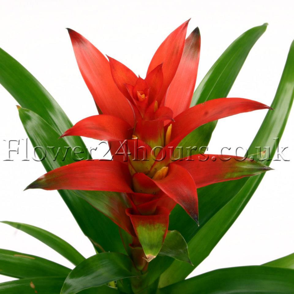 Indoor Flowering Plants Easiest Flowers To Grow Indoors Advices