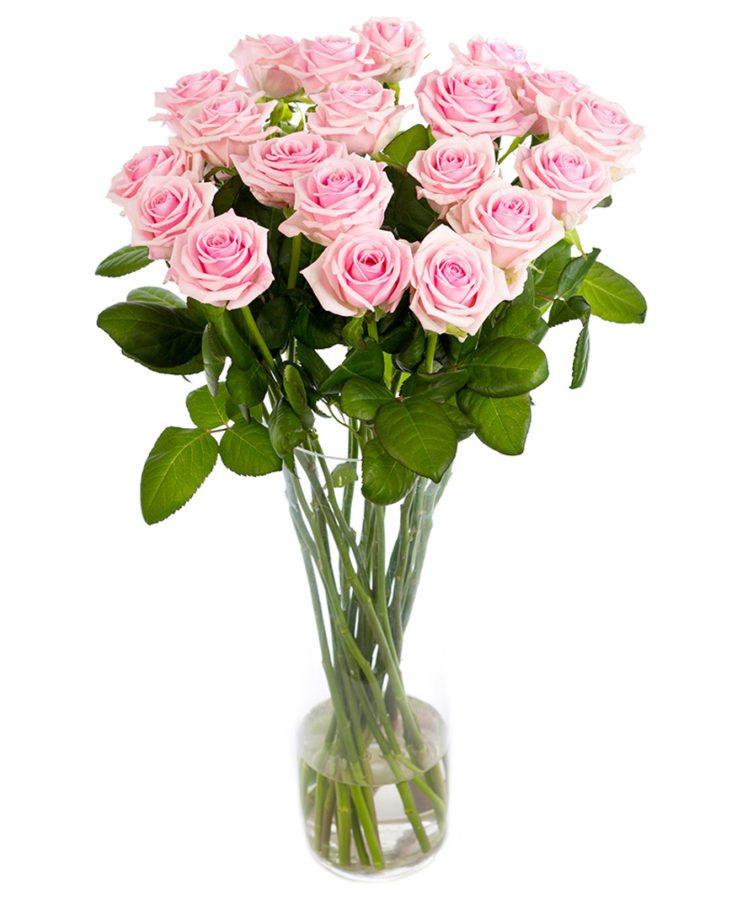 Long Stemmed Roses Soft Pink