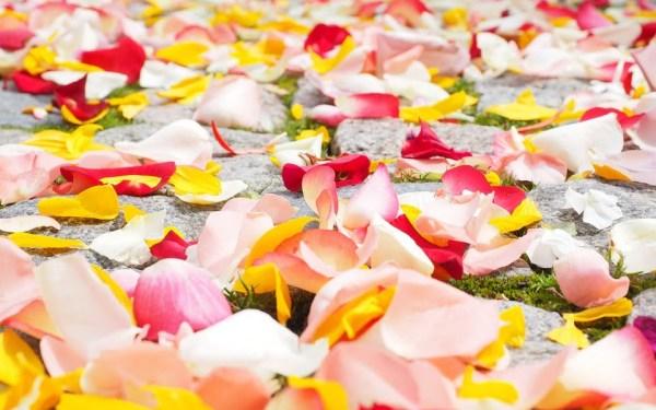 freeze dried rose petals