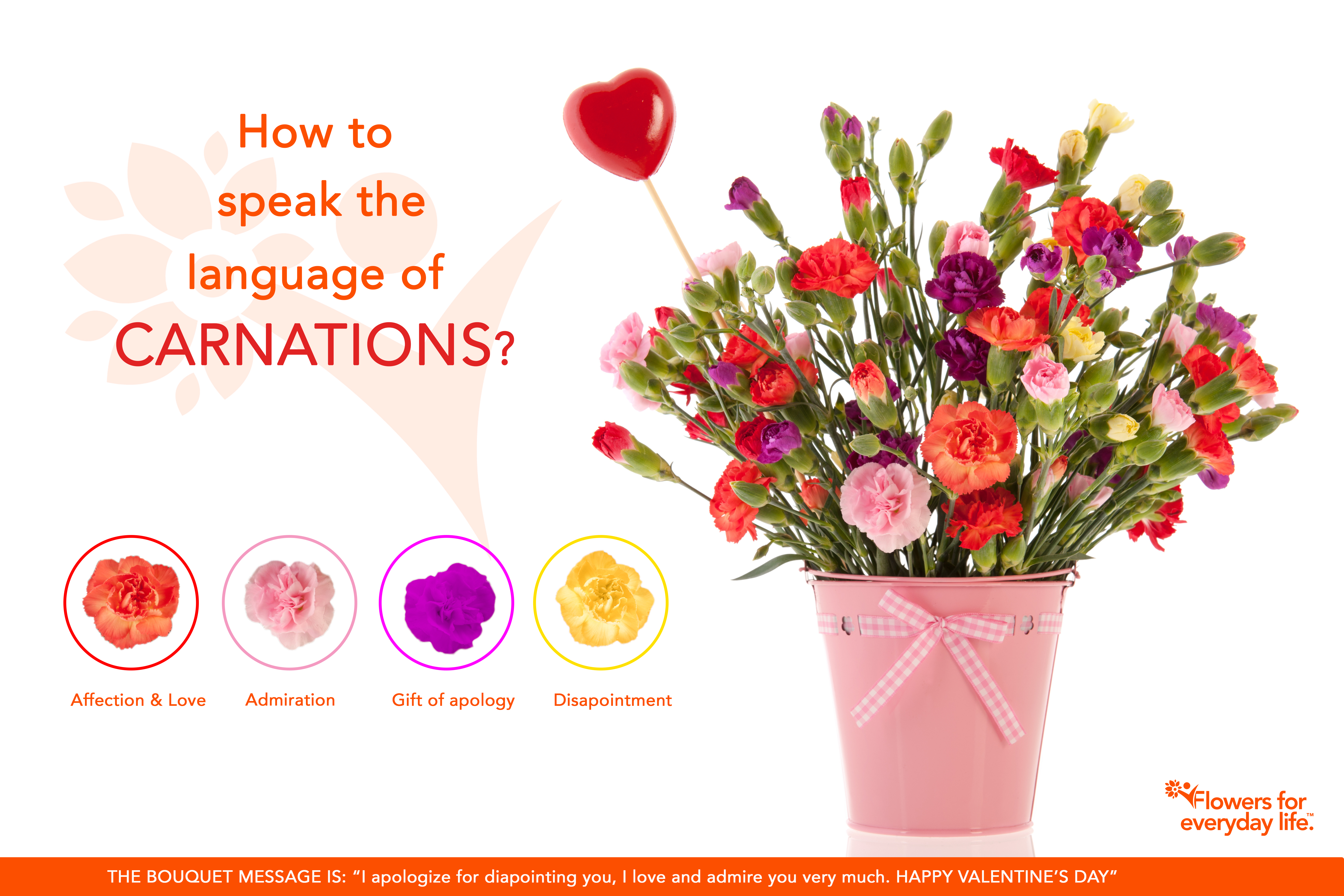 Carnations For Valentine S Day Learn Their Secret