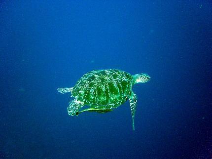 Manado Aquatique