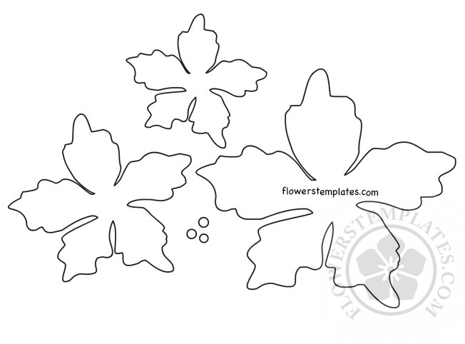 Poinsettia Flower Template Printable Flowers Templates
