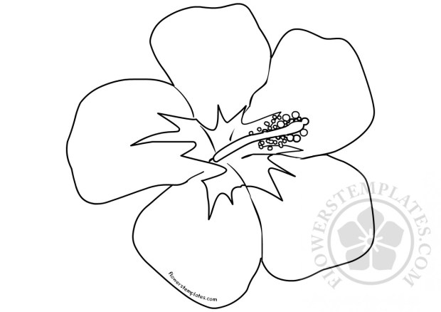 Hawaiian Flower