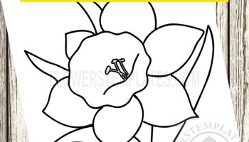 St David's Day, 1st March - colouring page | Saint david's day ... | 200x350