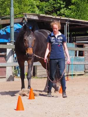 Flow Paard en Coach Apeldoorn