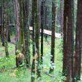 schwanden brienz trail