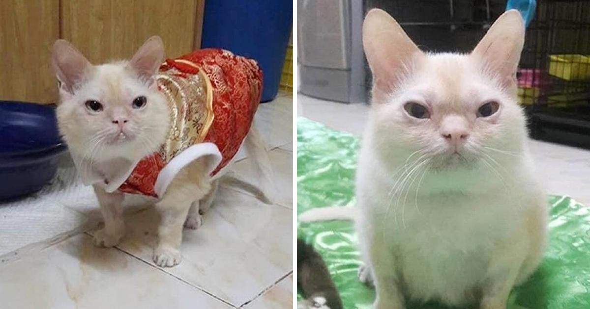 飼主怨「我家的貓長很醜」沒人相信 一秀真面目全網愣住:好像老鼠… - Fluffy 寵毛孩