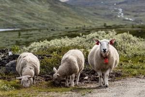 Fluid Film op basis van lanoline. Lanoline wordt gewonnen uit het wolvet van schapen is de perfecte bescherming tegen roest.