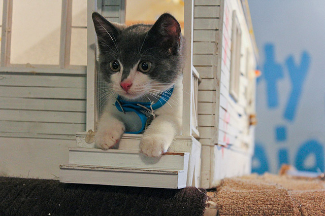 Kitty-in-Kitty-house
