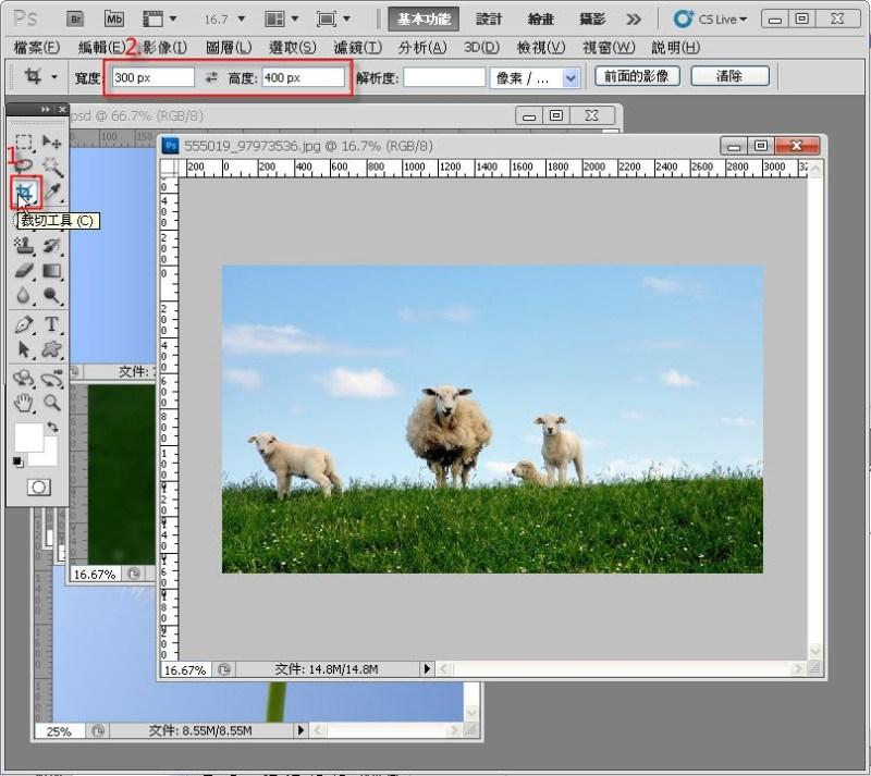 Photoshop 影像設計  - PHOTOSHOP 入門教學 - 圖片固定裁切與白邊 - SNAG0008