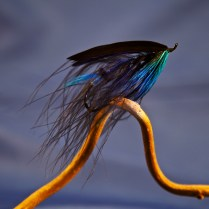 The 'Blue Mayer' spey :: pattern design + tie by Chris J Wesson